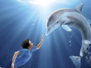 winter o golfinho