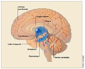 o-cerebro-trino-e-a-nossa-casa